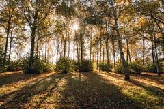 Lumière du soleil de matin tombant au-dessus de la forêt d'automne Images libres de droits