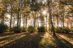 Lumière du soleil de matin tombant au-dessus de la forêt d'automne Photographie stock