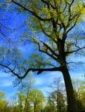 Lumière du soleil de ressort sur les arbres majestueux Photographie stock