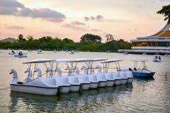 Lumière du soleil de soirée et bateau de rotation de cygne dans le lac Photo stock