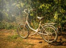 Lumière du soleil de vélo photos stock