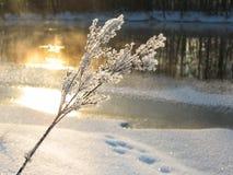 Lumière du soleil en hiver Photo libre de droits