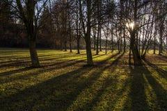 Lumière du soleil en parc Image libre de droits