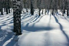 Lumière du soleil entre les arbres dans la forêt d'hiver Photo stock