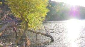 Lumière du soleil et lac d'arbre clips vidéos