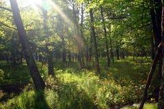 Lumière du soleil et les bois photographie stock