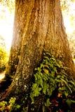 Lumière du soleil heurtant un arbre Photo libre de droits