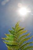 Lumière du soleil lumineuse dans le lense avec la fougère Image stock
