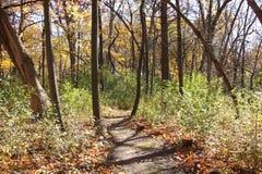 Lumière du soleil lumineuse par les arbres sur un chemin de région boisée Image libre de droits