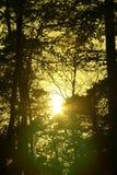 Lumière du soleil mystérieuse dans une forêt hollandaise Photographie stock