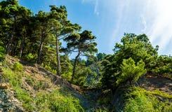 Lumière du soleil non-urbaine de nature d'été de région boisée de couleurs de paysages Image libre de droits