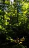 Lumière du soleil pénétrant une forêt de parc d'algonquin image stock