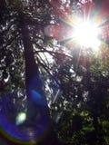 Lumière du soleil par des arbres Images libres de droits