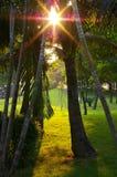 Lumière du soleil par des arbres Image libre de droits