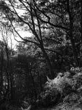 Lumière du soleil par des fougères et des arbres Automne tôt photo libre de droits