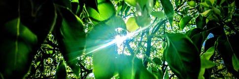 Lumière du soleil par l'arbre images libres de droits