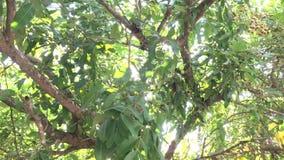 Lumière du soleil par l'arbre en parc clips vidéos