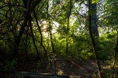 Lumière du soleil par la forêt photo stock