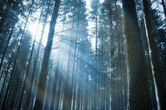 Lumière du soleil par la forêt Images libres de droits