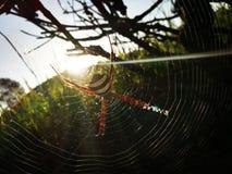 Lumière du soleil par la toile d'araignée Photo libre de droits