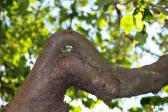 Lumière du soleil rétro-éclairée par les arbres Photo libre de droits
