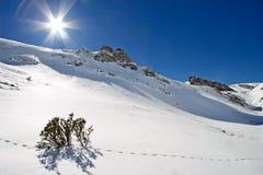 Lumière du soleil sur la neige pure Photos stock