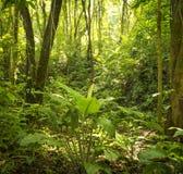 Lumière du soleil sur le plancher de forêt Photographie stock