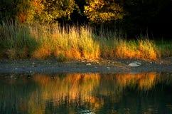 Lumière du soleil sur le rivage herbeux Photographie stock libre de droits