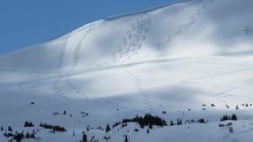 Lumière du soleil sur les traînées couvertes de neige de ski de montagne Image libre de droits