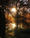Lumière du soleil traversant des arbres et se reflétant outre de l'eau Photos stock