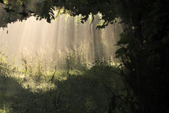 Lumière et ombre Images stock
