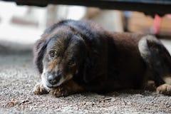 Lumière et ombre de beau chien se couchant sur le plancher Images stock