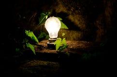 Lumière et vie Image stock