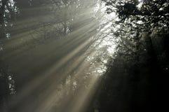 Lumière II d'arbre Image stock