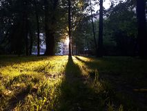 Lumière lumineuse tombant l'herbe photo stock