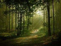Lumière mûre de s Image libre de droits