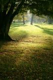 Lumière magique de forêt Photo stock