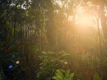 Lumière molle sur la jungle Thaïlande Photos stock