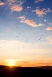 Lumière mourante du soleil - oiseaux migrateurs Images libres de droits