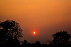 Lumière orange de coucher du soleil sur le bois noir photographie stock libre de droits