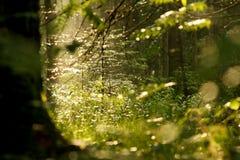 Lumière par des arbres Photos libres de droits