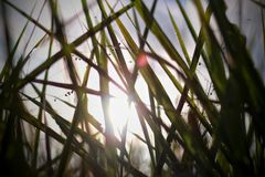 lumière par l'herbe photographie stock