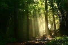 Lumière par la forêt Photos stock