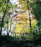 Lumière par les arbres Photographie stock