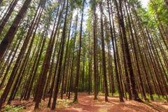 Lumière par les arbres images libres de droits