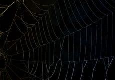 Lumière réfractée sur une toile d'araignée couverte de rosée Photos stock