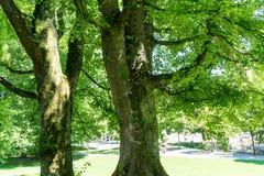 Lumière sous un arbre Image libre de droits