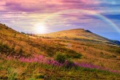 Lumière sur la pente de montagne en pierre avec la forêt Image stock