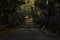 Lumière tachetée tombant sur une voie étroite dans les bois les longues ombres d'arbres d'eucalyptus remplissent voie dans le dod photos stock