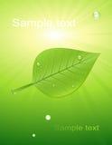 lumière verte de lame Image stock